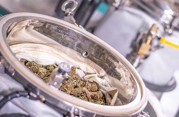 Cannabis-flower